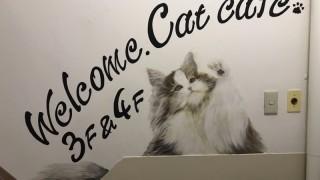 【壁画☆ネコカフェ・ペットショップ】@東京都新宿区『Coo&RIKU』様